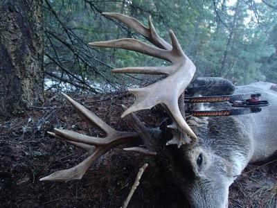 wt Buck
